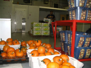 local food warehouse